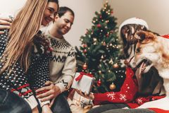 Happy family in stylish sweaters and cute dog having fun at chri. Stmas tree with lights. atmospheric emotional moments. merry christmas and happy new year Stock Photos