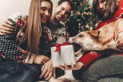 Happy family in stylish sweaters and cute dog having fun with gi. Fts at christmas tree with lights. atmospheric emotional moments. merry christmas and happy new Stock Photo