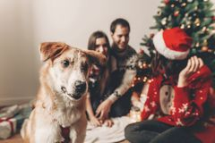 Happy family in stylish sweaters and cute funny dog celebrating. At christmas tree with lights. emotional moments. merry christmas and happy new year concept Royalty Free Stock Image