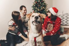 Happy family in stylish sweaters and cute funny dog celebrating. At christmas tree with lights. emotional moments. merry christmas and happy new year concept Royalty Free Stock Photography