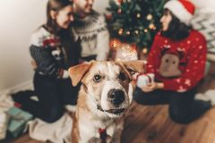 Happy family in stylish sweaters and cute funny dog exchanging g. Ifts at christmas tree with lights. emotional moments. merry christmas and happy new year Stock Photos