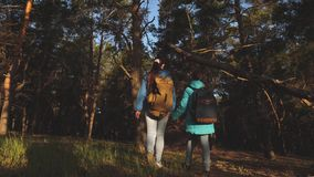 Happy family travels. mother and daughter travelers walking through the woods with a backpack. Hiker Girs in a pine stock video