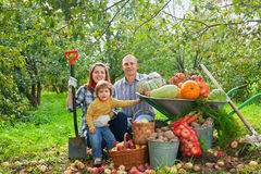 Happy  family with vegetables harvest. Happy parents and child with  harvested vegetables in garden Royalty Free Stock Image