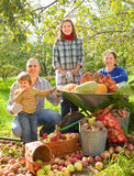 Happy  family with vegetables harvest Royalty Free Stock Photography