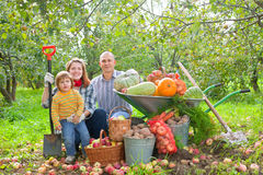 Happy  family with vegetables harvest. Happy parents and child with  harvested vegetables in garden Stock Photo