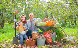 Happy  family with vegetables harvest. Happy parents and child with  harvested vegetables in garden Royalty Free Stock Photos