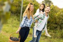 Happy family in vineyard. At sunny day royalty free stock photo