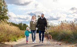 Happy family walking with beagle dog in autumn. Family, pets and people concept - happy mother, father and little daughter walking with beagle dog on leash in stock photos