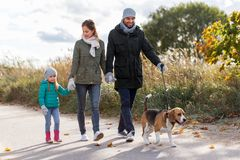 Happy family walking with beagle dog in autumn. Family, pets and people concept - happy mother, father and little daughter walking with beagle dog in autumn stock image
