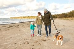 Happy family walking with beagle dog on beach. Family, pets and people concept - happy mother, father and little daughter walking with beagle dog on leash on royalty free stock photo