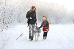 Happy family walks with a dog huskies in beautiful to the snow wood stock image