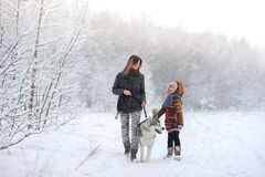 The happy family walks with a dog huskies royalty free stock image