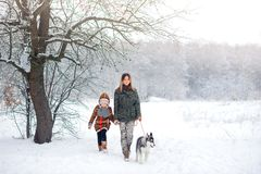 Happy family walks with a puppy huskies. In the winter wood stock photos
