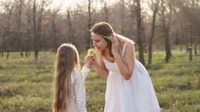 Happy family walks in the spring meadow royalty free stock images