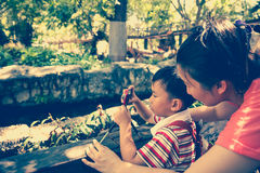 Happy family. Woman teaching boy photographing outdoors. Stock Photos
