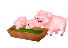 Happy farm pig family Royalty Free Stock Photos