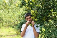 Happy farmer. Farmer showing high quality plants Royalty Free Stock Photos