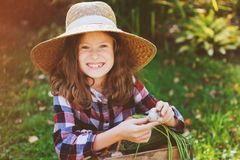 Happy farmer child girl picking autumn harvest in wooden box. Growing organic garlic, carrots, pumpkins and zuccini on own vegetable garden Stock Images