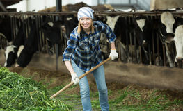 Happy farmer collecting grass with pitchfork Royalty Free Stock Photos