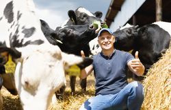 Happy farmer among cows. Happy male farmer on cow farm around herd royalty free stock image