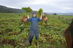 The happy farmer Stock Image