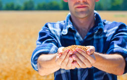 Happy farmer holding ripe wheat corns Royalty Free Stock Photos