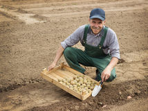Happy farmer planting potatoes Stock Images