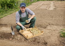 Happy farmer is preparing to plant potatoes Stock Images
