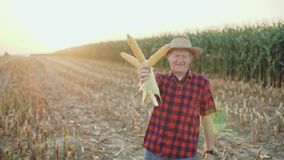 Happy farmer shows the good corn harvest at camera 4K.  stock video footage