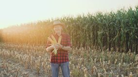 Happy farmer shows the good corn harvest at camera 4K.  stock video