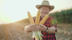 Happy farmer shows the good corn harvest at camera 4K.  stock footage