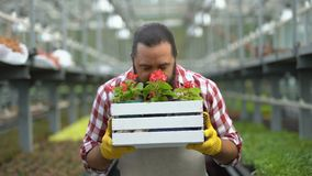 Happy farmer sniffing beautiful flowers in greenhouse, successful business stock video footage