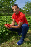 Happy farmer with strawberries Royalty Free Stock Images