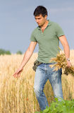 Happy farmer in wheat field. Satisfied young farmer touching ripe golden wheat in field Stock Images