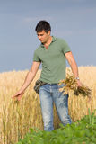 Happy farmer in wheat field. Satisfied young farmer touching ripe golden wheat in field Royalty Free Stock Images