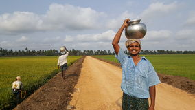 Happy farmer. Working in his paddy fields in rural south india Royalty Free Stock Photography