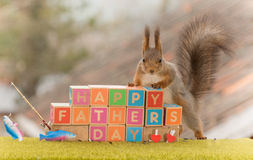 Happy father day. Red squirrel standing with wooden blocks with the words happy fathers day Royalty Free Stock Image
