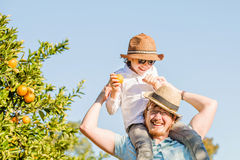Happy father with his young son have fun on citrus Stock Photos