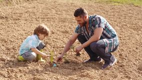 Happy father and son planting on spring field. Garden tools. Eco living - father and son farmer planting in the farm stock video