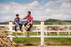 Happy Father And Son Smiling In Farm With Cows. Everyday life for farmer with cows in the countryside. Peasant work in South America with livestock in family Royalty Free Stock Photography