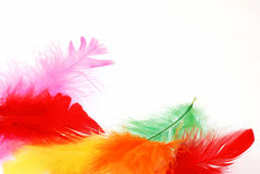 Happy feathers Royalty Free Stock Photo