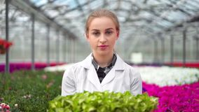 Happy female biology scientist bringing box organic seedling working in greenhouse medium close-up. Beautiful woman agricultural engineer walking near plants stock video footage
