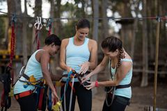 Female friends getting their belt tied to perform zip line. Happy female friends getting their belt tied perform zip line in park royalty free stock image