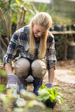Happy female gardener planting outside greenhouse Stock Images