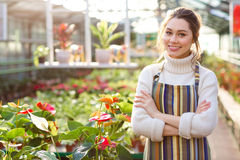 Happy female gardener standing near flowers of anthuriums in greenhouse Stock Photos