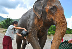 Happy female tourist bathing elephant by river Stock Photo