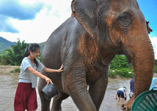 Happy female tourist bathing elephant by river Royalty Free Stock Photos