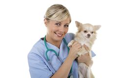 Happy female vet with lap dog. Isolated on white stock images