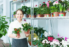 Happy florist with kalanchoe Royalty Free Stock Photos