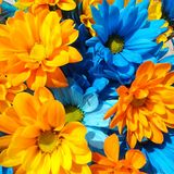 Happy flowers 1 royalty free stock photography